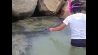 海水浴に行き50センチの竹竿と釣り針で魚をシュノーケルで見ながら釣り...