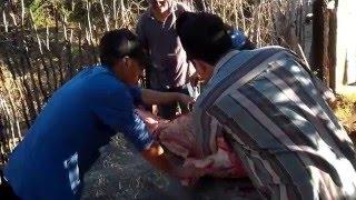 Matando cochi en San Blas sinaloa