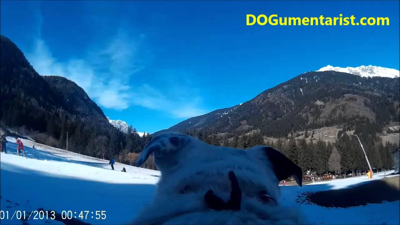 Il dogo sulle piste da sci: borno