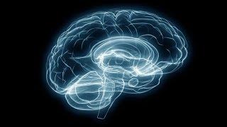 بالفيديو.. نجاح صنع دماغ بشري في المختبر