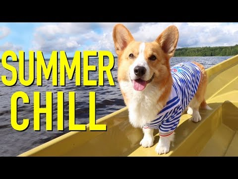 A DAY OFF FROM THE SET - Topi the Corgi