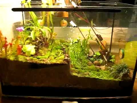 terrarium mit bewegung nov 2009 youtube. Black Bedroom Furniture Sets. Home Design Ideas