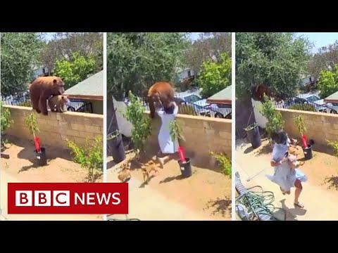 ¿Te enfrentarías a un oso para salvar a tu perro? Esta chica si