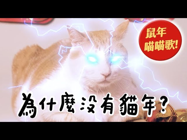 【黃阿瑪的後宮生活】為什麼沒有貓年?鼠年喵喵歌!