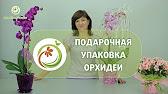 Букет фрезий с доставкой в санкт-петербурге недорого ✓ цена, фото, отзывы на сайте ✿ заказать цветы в семицветик.
