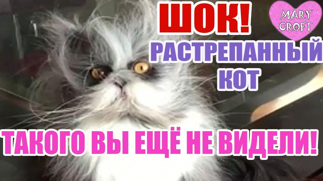 Кот угу