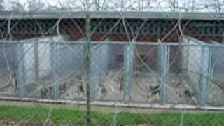Beagles-tierversuchslager.mpg
