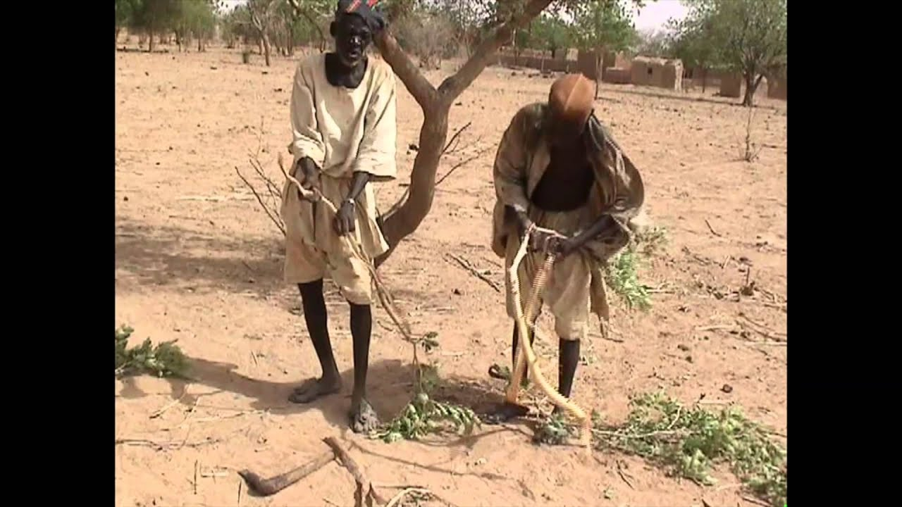 Smelting Iron in Africa (A DEMONSTRATION)