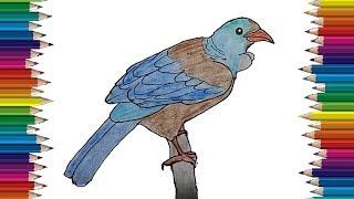 drawing bird draw step tui easy tutorial