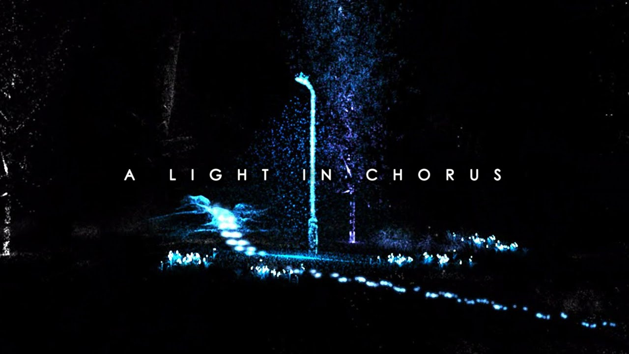 Image result for a light in the chorus