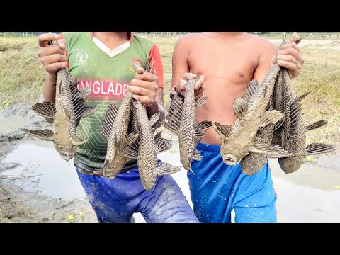 Smart Boys Catching Dangerous Fish By Hand. Fishing In Mud Water.