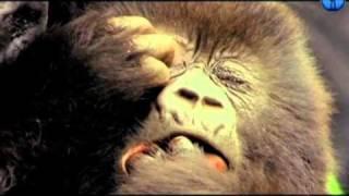 Обезьяны. Правда о диких животных, Monkeys. Truth about wild animals