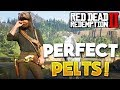 RDR2 How To Get Perfect Pelts & Legendary Animals! Red Dead Redemption 2 Tips & Hunting