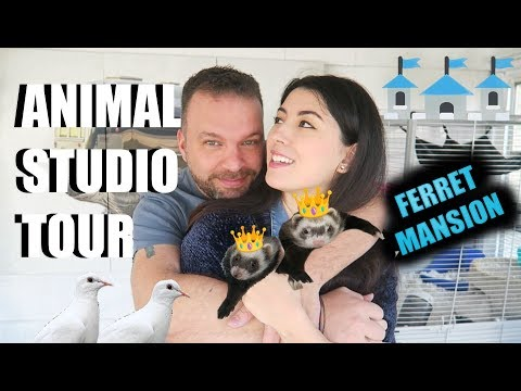 He GAVE Me An Animal Studio | Pet Room Tour (Where I Keep My Colder Temperature Pets)