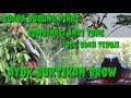Suara Burung Pikat Semua Jenis Burung Kombinasi Ampuh Terbukti  Mp3 - Mp4 Download