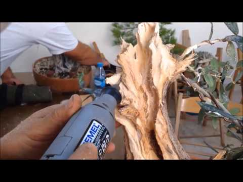 Part II Deadwood Work on an Olive by Ignazio Giambrone at BCG-Malta October 2014