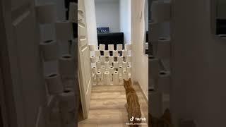 Видио из тик тока про кошек