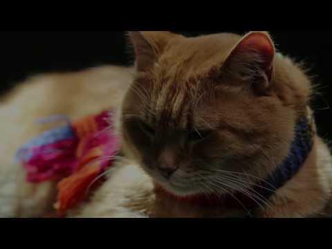 A Street Cat Named Bob - Big Issues - At Cinemas November 4
