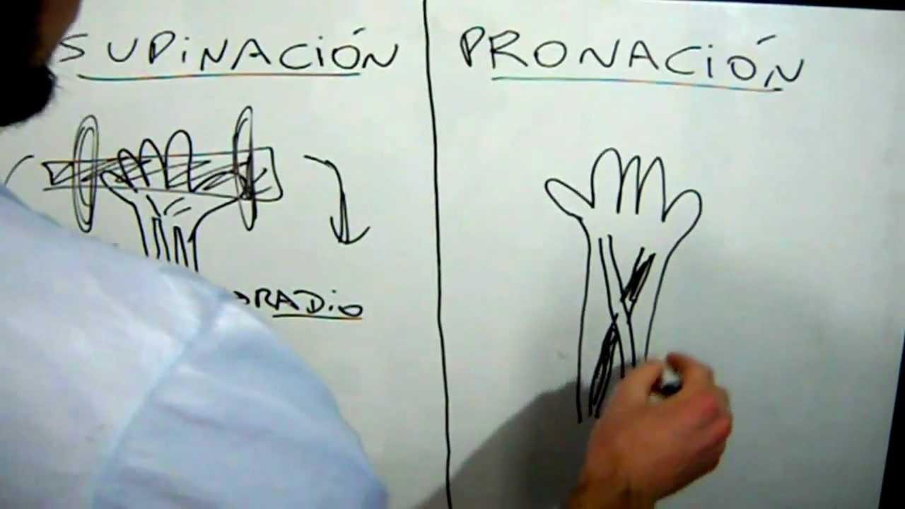Supinación y pronación dos diferentes tipos de agarres para máquinas ...