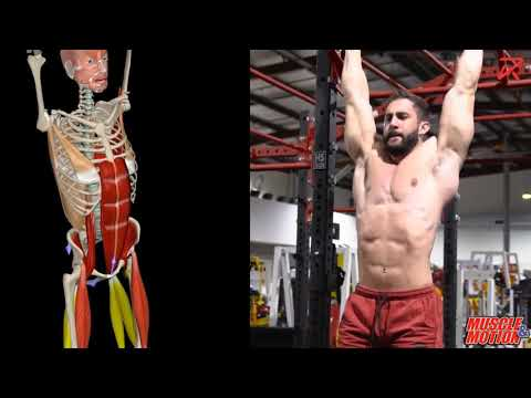 Hanging Leg Raises (Hip Flexion)