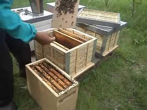 Пчелопакеты заселяем в ульи из камыша. 4.05.2016