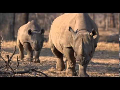 Black Rhino Hunter Corey Knowlton Received Death Threats