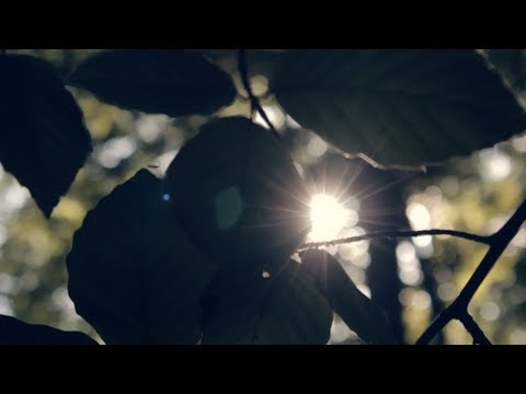 Into The Woods   A Cinematic Sequence   Film