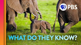Elephant Moms Carry the Wisdom of Generations | IN OUR NATURE