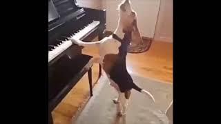 Funny Dog Compilation Video