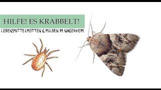 Hilfe es Krabbelt! Was tun bei Motten & Milben im Nagerheim? || Informationen & Tipps