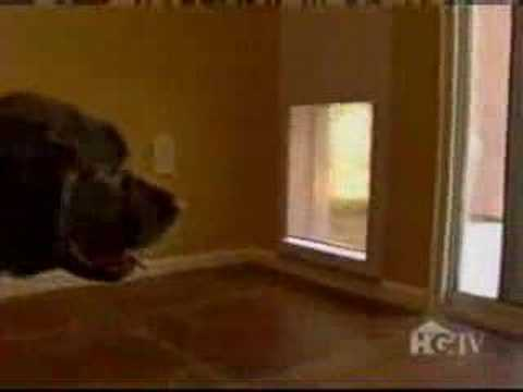 Power Pet Door Youtube