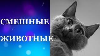 Смешные животные. Самые смешные кошки
