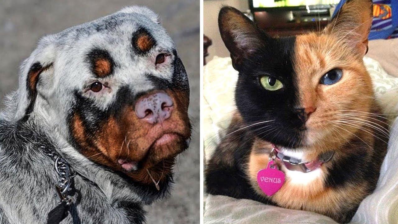8 Животных, Которые Родились с Невероятными Особенностями