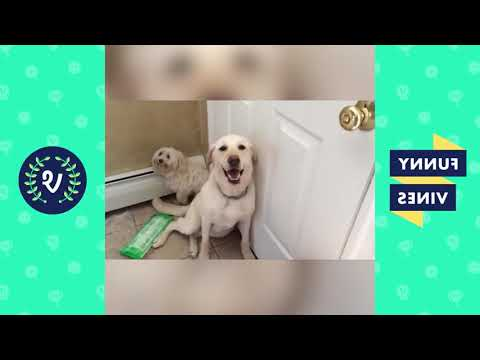 Funniest Guilty Pet Videos Weekly Compilation 2018 | Funny Pet Videos