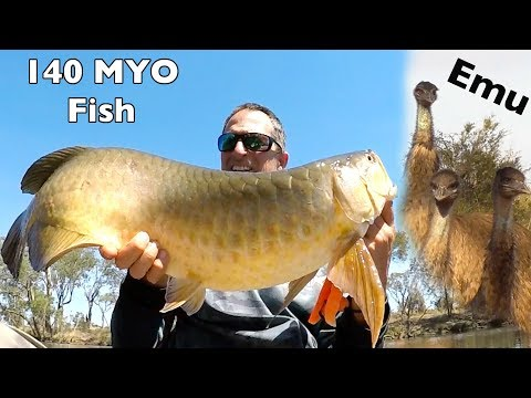 Over night trip catching Ancient monster Saratoga (Arowana) in outback Australia EP.372