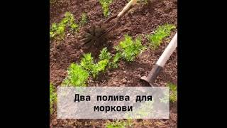 Полезные советы для сада и огорода. ч 14