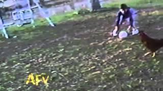 Chicken Soccer Pro