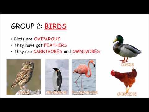 GROUPS OF VERTEBRATE ANIMALS