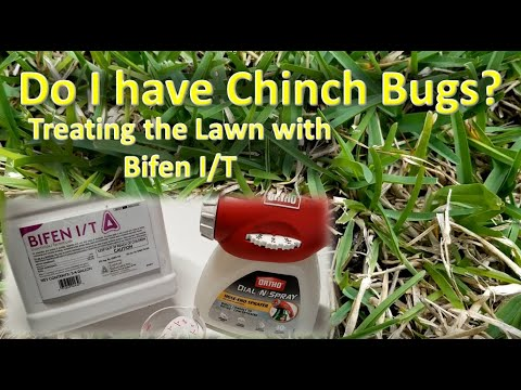 chinch-bugs-(and-mole-crickets)-in-st.-augustine-grass?-treating-with-bifen-i/t