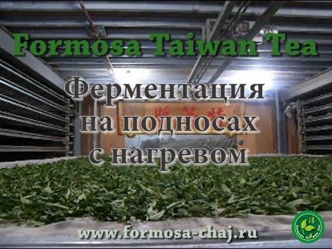 Ферментация окисление чая Формоза Тайвань Чай | www.formosa-chaj.ru Подарочный чай