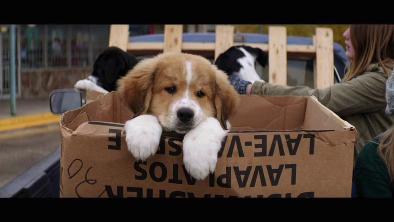 A Dog S Purpose Toby Breed