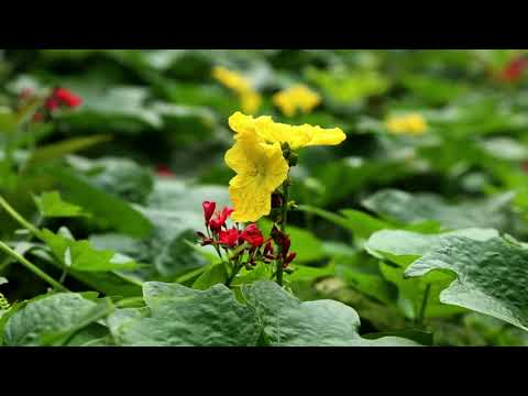 Amazing Nature ,Wonderful  Earth & The Beauty of Nature・Full HD 1080p