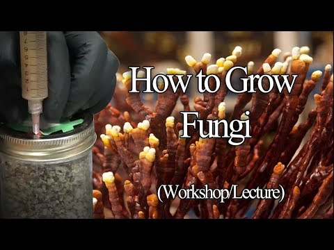 How To Grow Edible Mushrooms: Workshop And Lecture