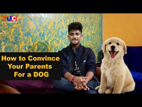 How To Convince Your Parents For DOG : The Ultimate Channel