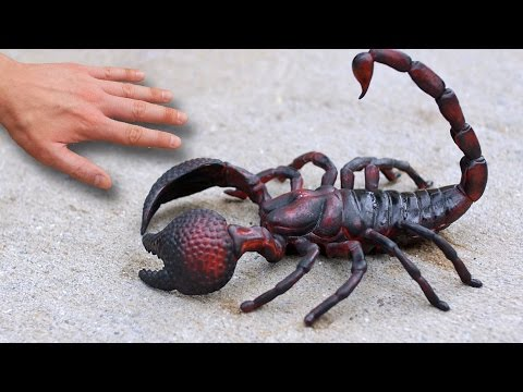 GIGANTIC SCORPION!