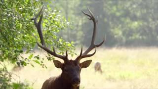 Национальный парк «Редвуд» – удивительная природа! качество – 4К
