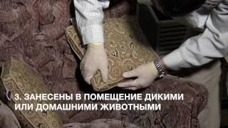видео Что делать, если появились тараканы в квартире: руководство к действия