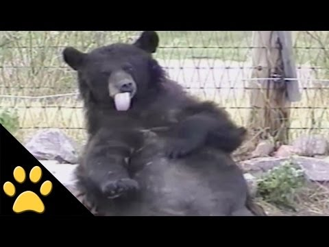 Bears Are Awesome: Compilation