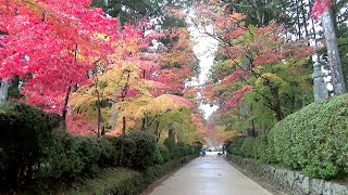 高野山 壇上伽藍 金剛峯寺(世界遺産)2015 11 小雨