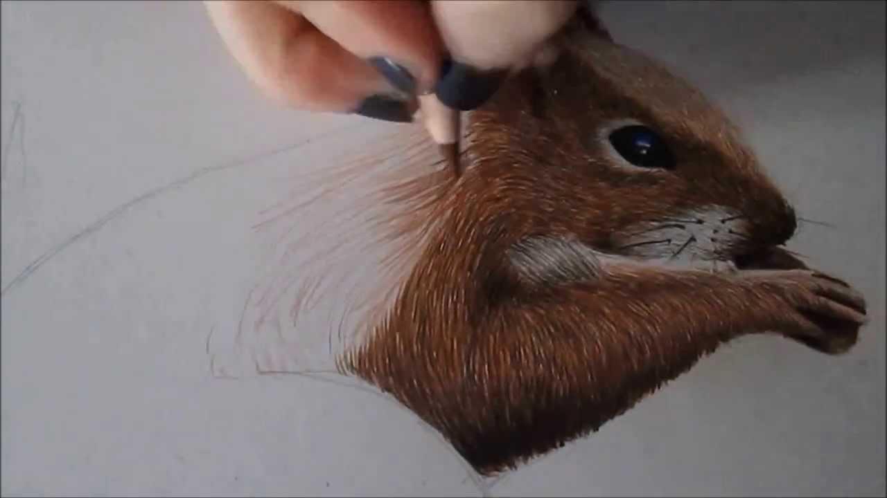 Speedpainting Squirrel Youtube